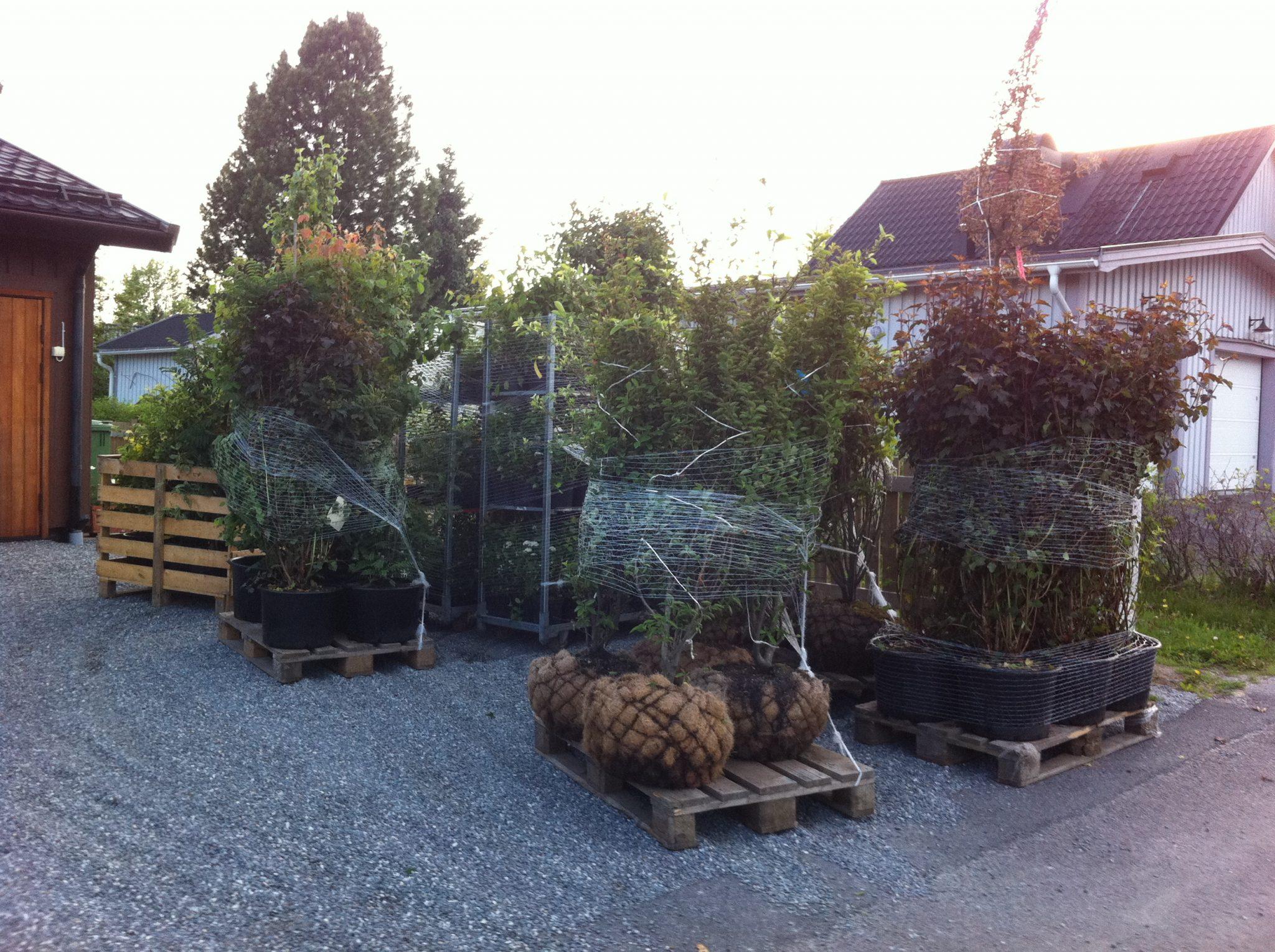 Anläggning av din trädgård